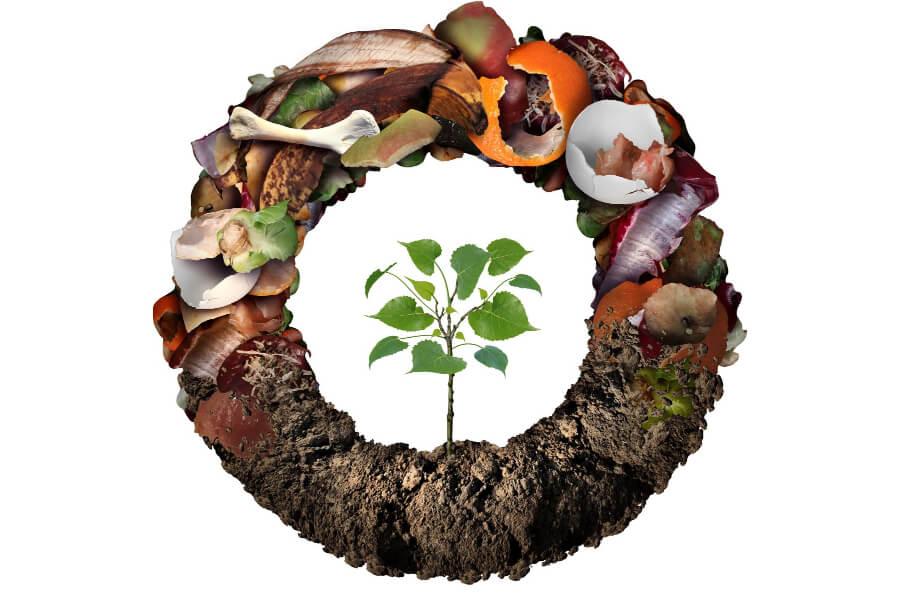 compostabile-e-biodegradabile-ambiente